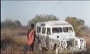 vast African Pennises